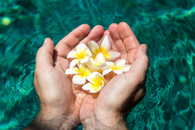 Flowers in hands in the pool royalty free stock image