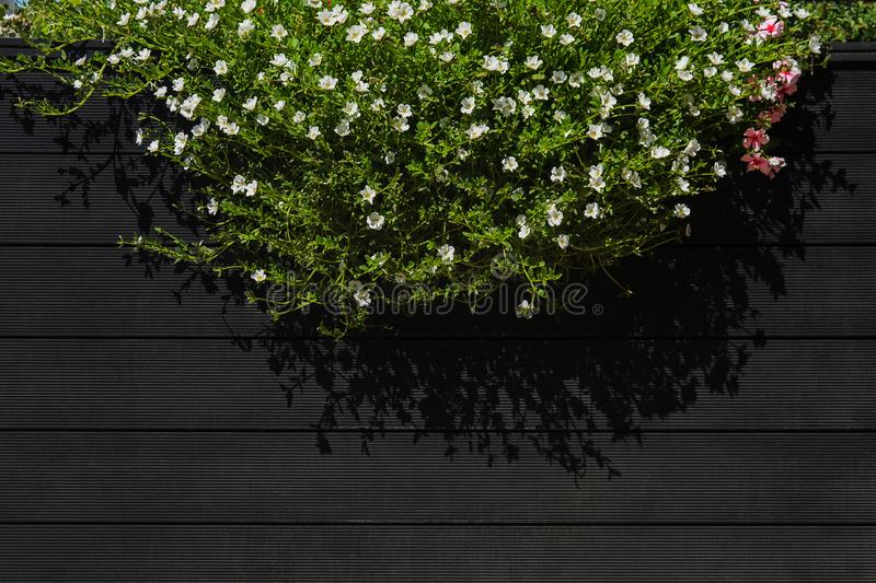 Flowers hanging on black wood wall of street cafe with copy space stock photo