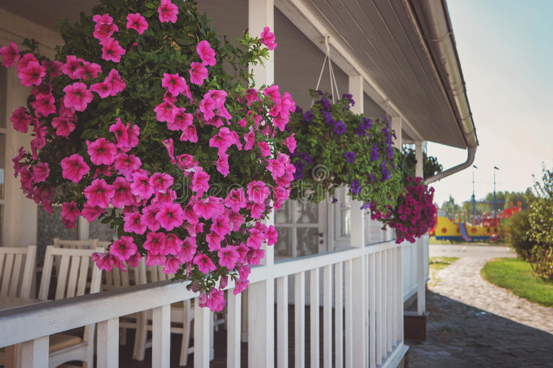 Flowers hanging on the porch. House of white color. Aroma of fresh petunias. Real estate outside town royalty free stock images
