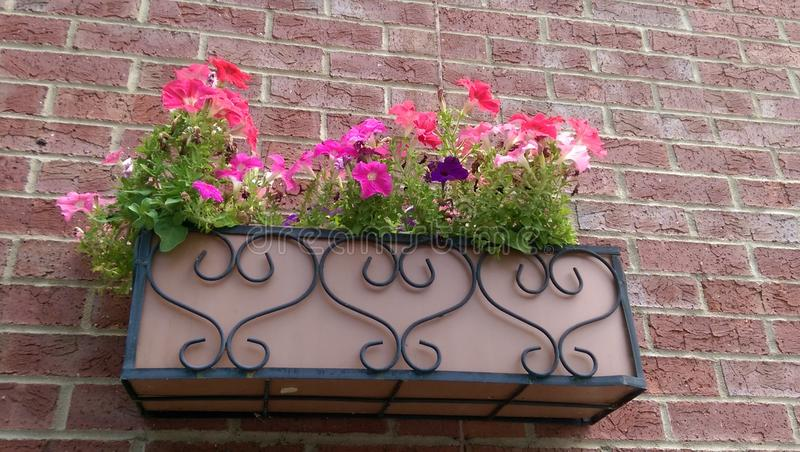 Flowers in heart planter stock photography