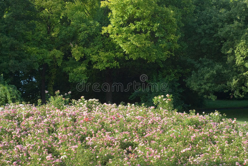 Download Flowers on a Hill stock image. Image of picturesque, colorful - 15208979
