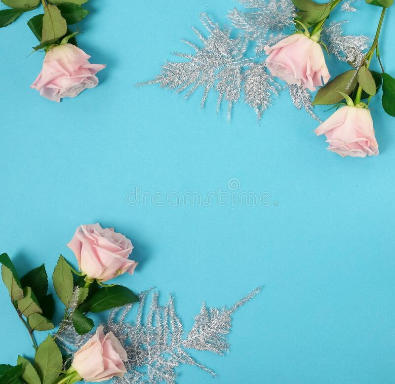 Free Flowers Holiday Background. Beautiful Pink Roses And Silver Leaves On Blue Backgrop Stock Image - 169261211