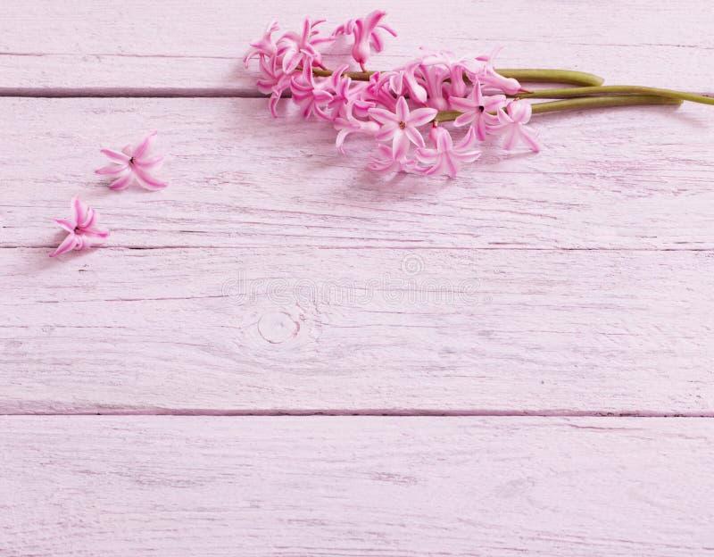 Flowers hyacinths on wooden background. Fresh flowers hyacinths on wooden background royalty free stock image