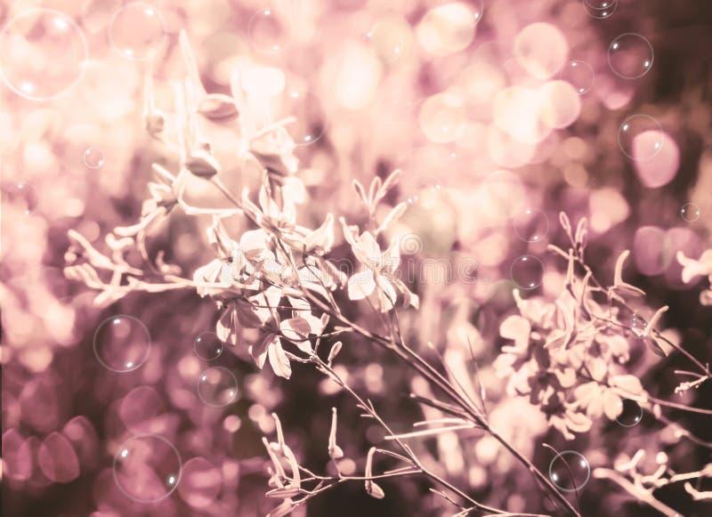 Flowers illuminated by happy sun stock photo