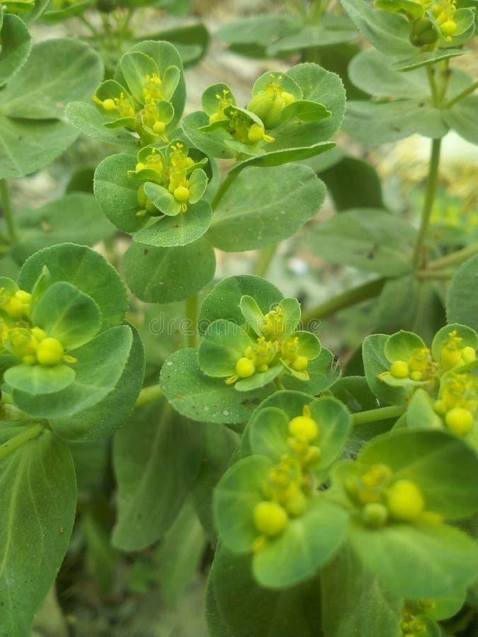 Flowers image photo stock images