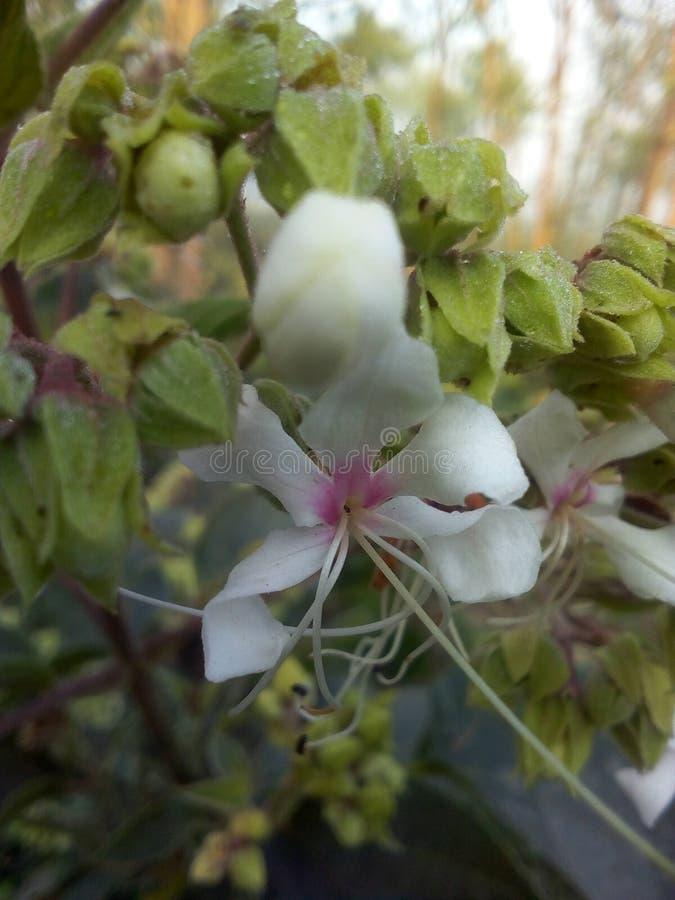 Flowers image photo royalty free stock photo