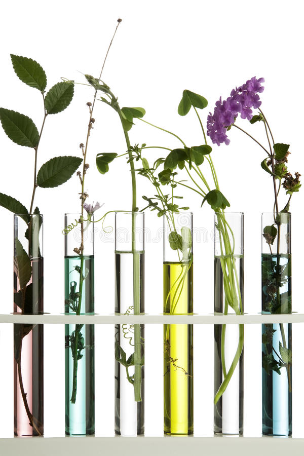 Free Flowers In Test Tubes Stock Image - 17031941