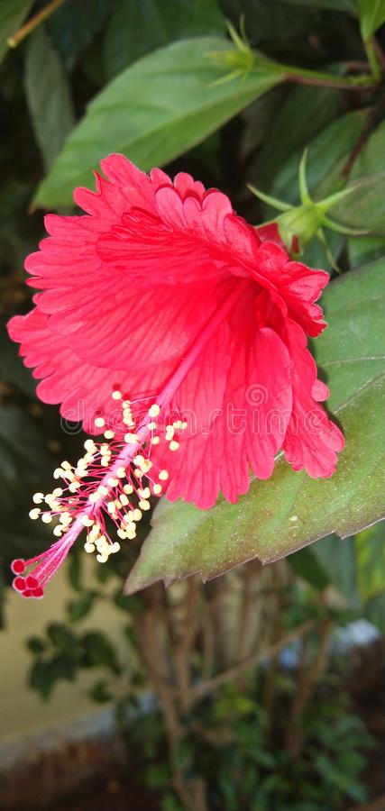 Flowers in India Coimbatore stock image