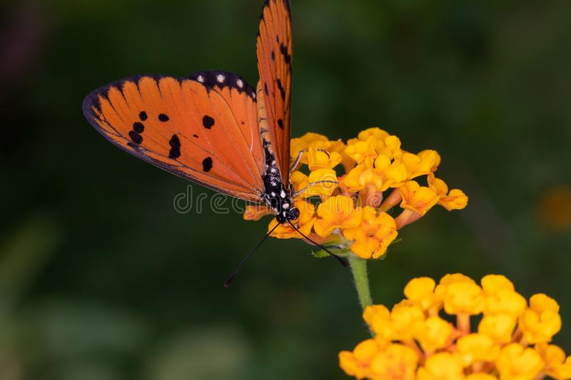 The flowers and insects on blur background in nature. In garden stock photo