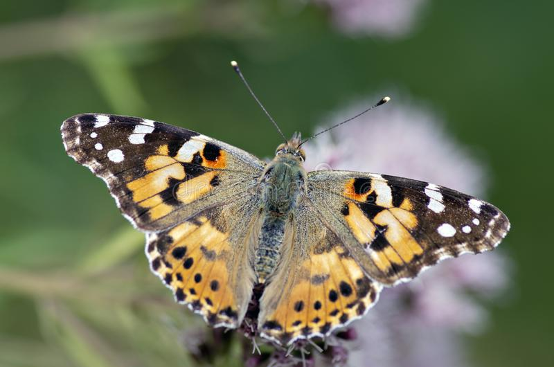 Flowers and insects in the bosom of nature. Polish parks and meadows royalty free stock photos