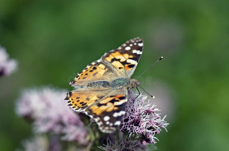 Flowers and insects in the bosom of nature. Polish parks and meadows royalty free stock images