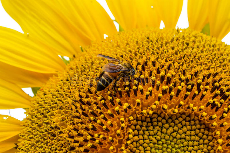 Flowers and insects royalty free stock photography