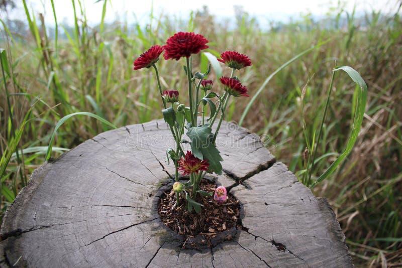 Flowers inside tree stem royalty free stock photography