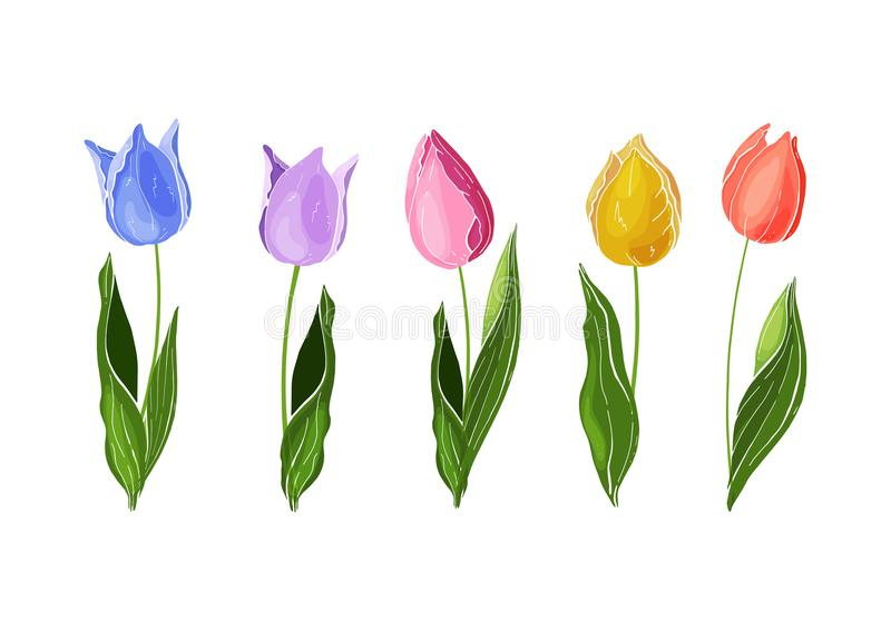 Flowers isolated on background. Vector. Hand drawn vector colorful tulips set. royalty free illustration