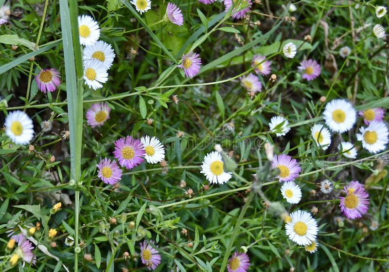 The flowers of joy stock image