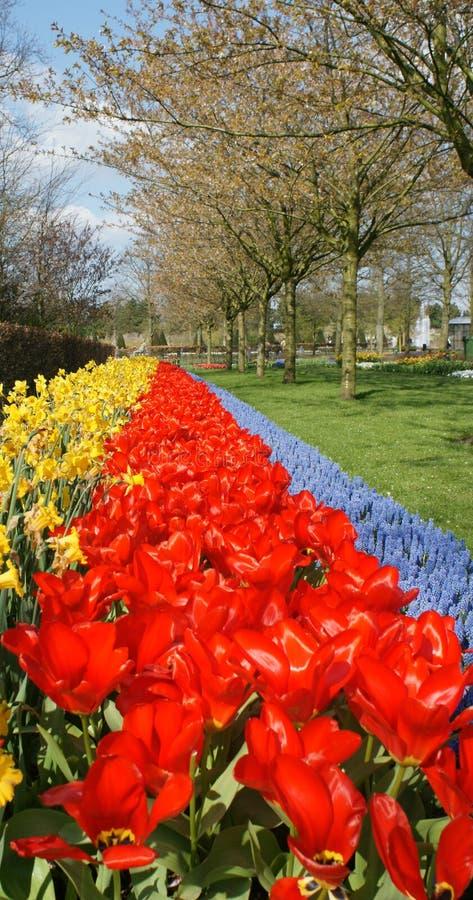 The Flowers of the Keukenhof Gardens stock photos