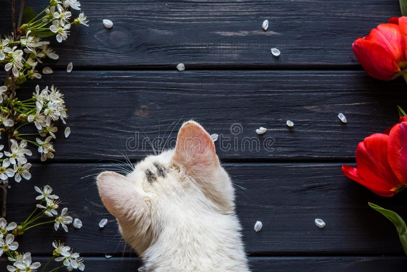 Flowers and kitten on a black wooden background stock photo
