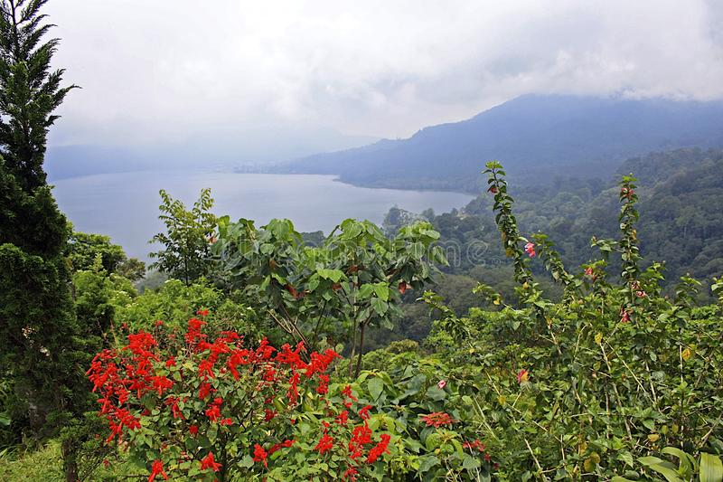 Flowers and lake Batur in Bali. Indonesia stock photography