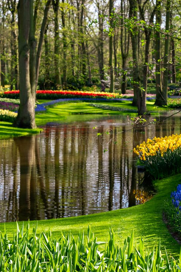 Flowers by the lake at Keukenhof Gardens, Lisse, South Holland. Photographed in HDR high dynamic range. royalty free stock image