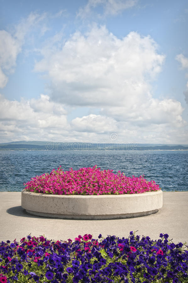 Flowers and Lake, Petoskey Michigan. Bold clouds and pink and purple petunia flowers on a bright blue sky day, provide a colorful backdrop on the waterfront pier stock image