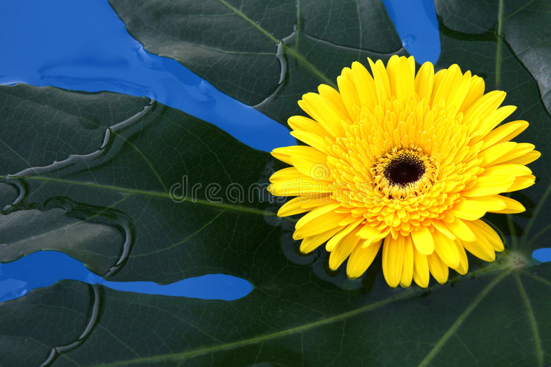 Flowers lay in water stock photography