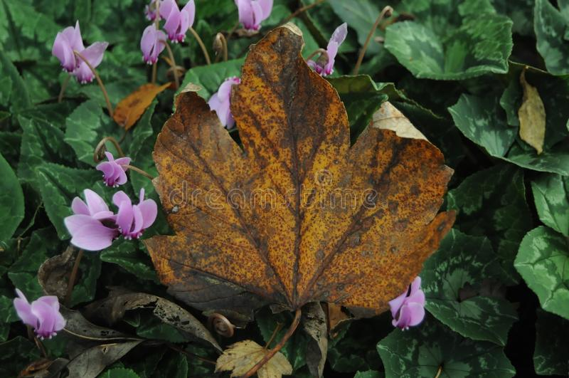 Autumn leave. Flowers & leave in Autumn royalty free stock photos