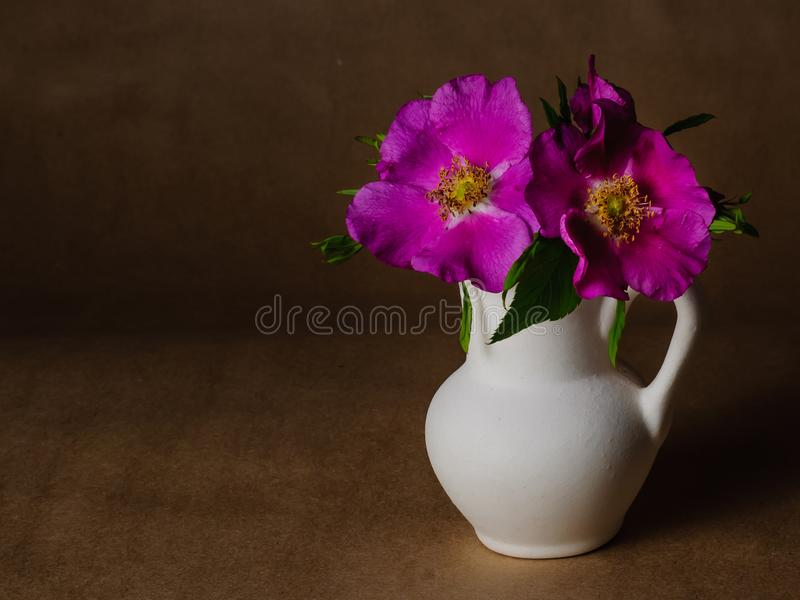 Flowers and leaves of dog rose in little white ceramic jug on against the background of dark craft paper royalty free stock image