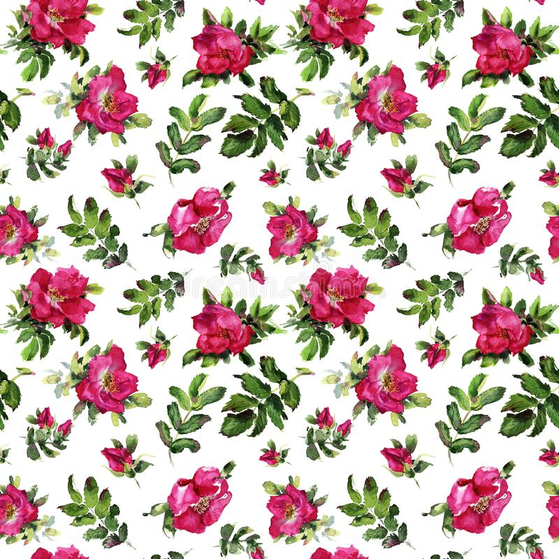 Rose flowers handmade watercolor seamless pattern gentle royalty free illustration