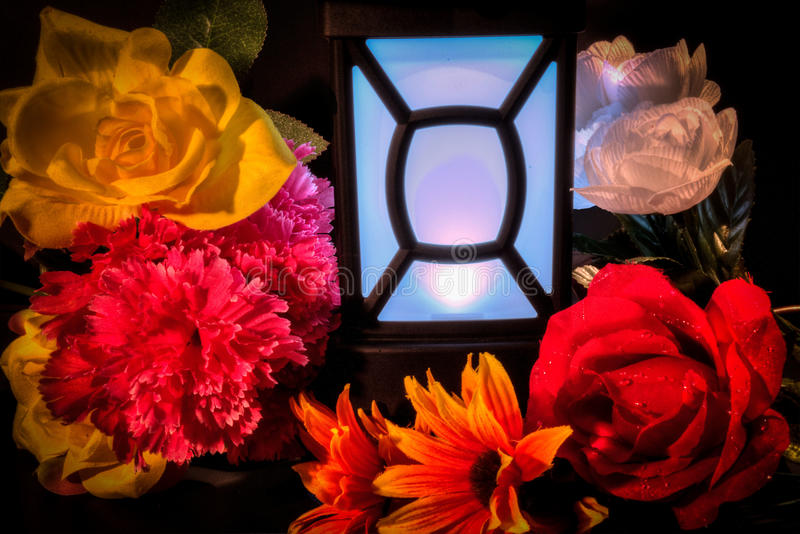 Flowers and light. stock photography