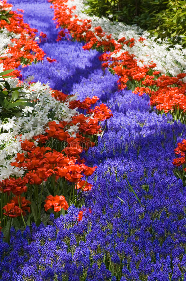 Flowers like a river. Red, white and blue flowers like a river stock images