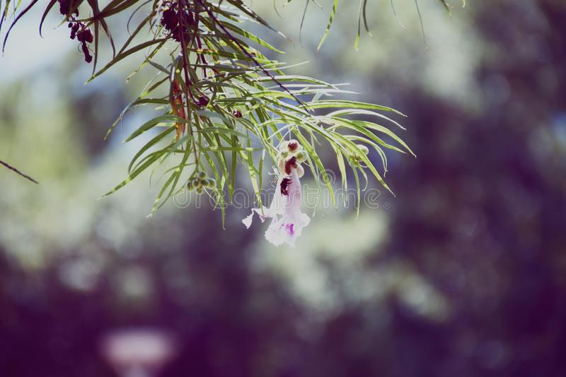 Flowers in lilac tonesin your garden stock photos
