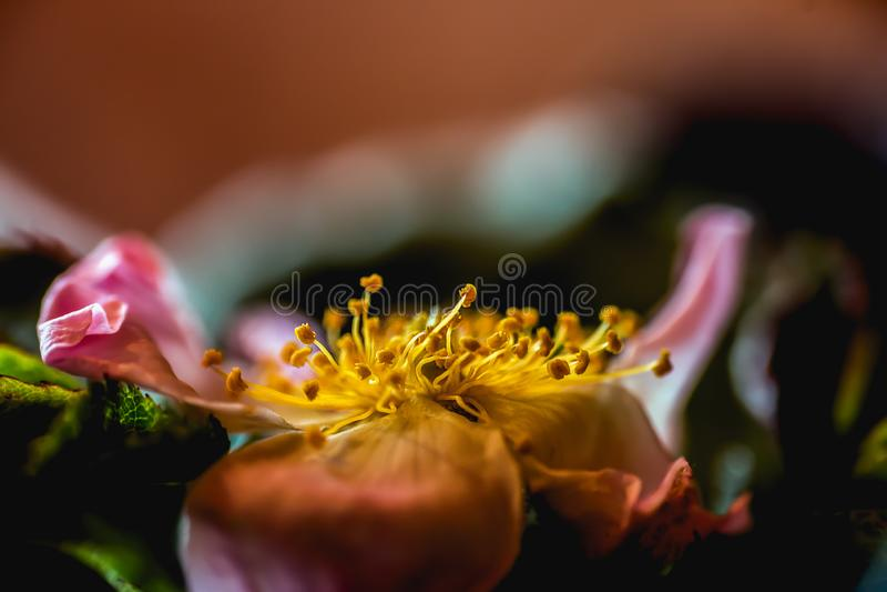 Flowers extreme macro closeup stock photo