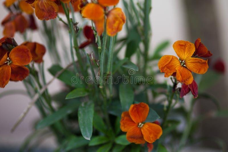 Flowers macro in spring. Orange colored flower floral bouquet flowers garden dew drops beauty petals stamen botany botanical plant love romance emotion emotional stock photo