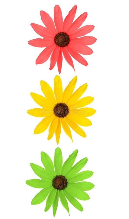 Flowers making traffic lights royalty free stock photo