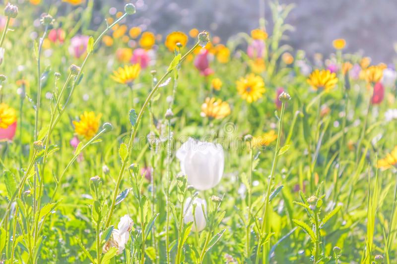 Many color Flowers royalty free stock photo