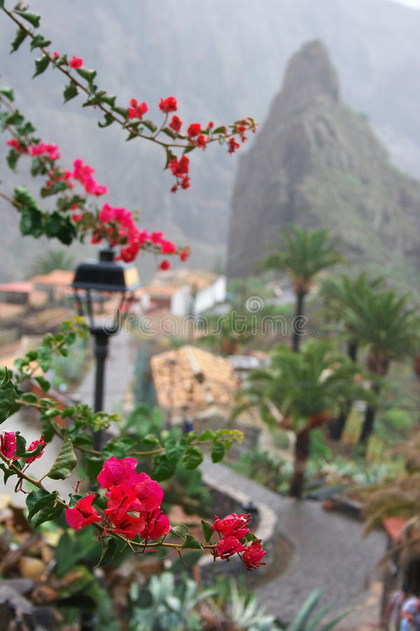 Download Flowers of Masca Mountain stock image. Image of destination - 17489189