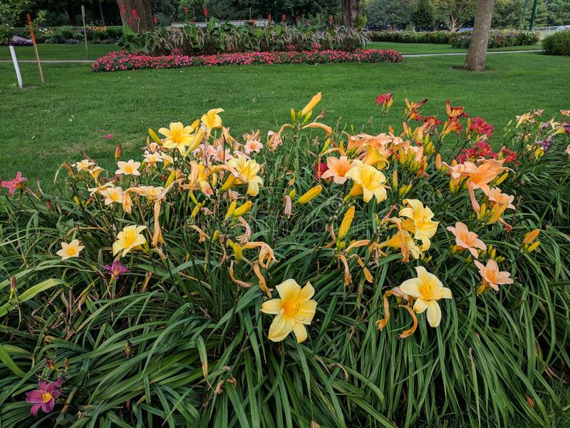 Flora in the Garden. Flowers in the McKennon Park flower garden royalty free stock images