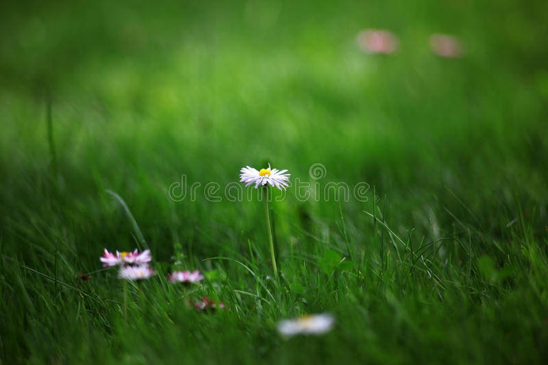Flowers At Meadow Royalty Free Stock Images