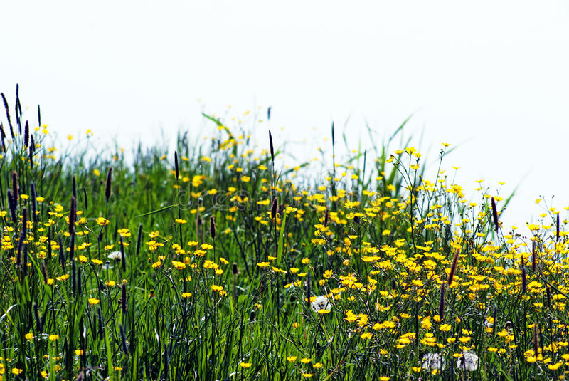 Download Flowers on a meadow stock photo. Image of fresh, copy - 33791084