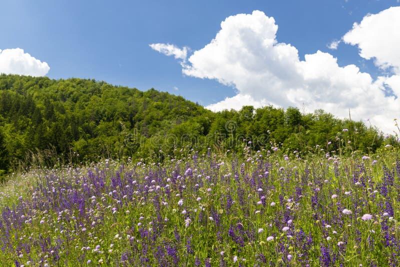 flowers meadow near Bohinj lake in Slovenia royalty free stock photography