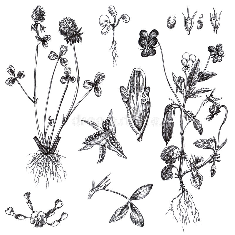 Download Flowers And Medicinal Herbs Stock Illustration - Image: 24046057