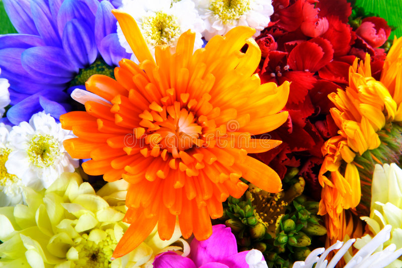 Flowers mix. Close-up of colourful summer flowers mix royalty free stock images