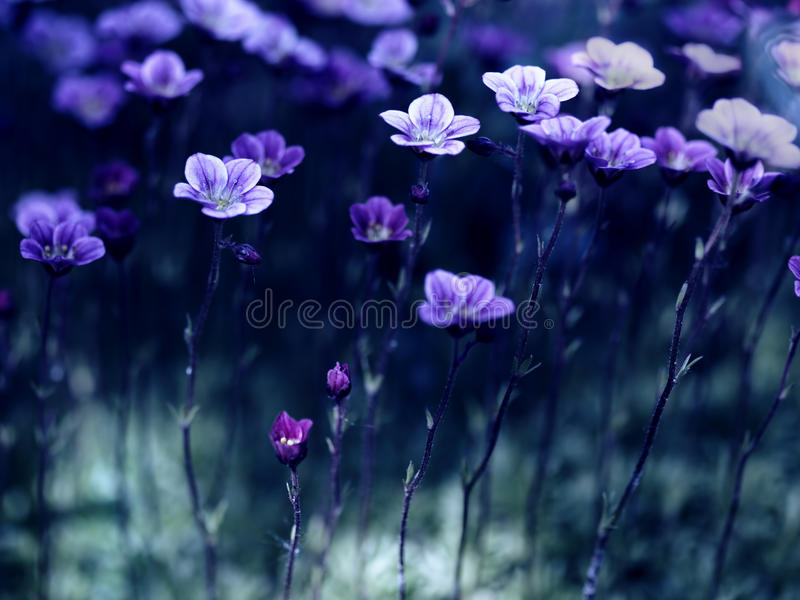 Flowers in the moonlight. Small flowers on long stems in the moonlight royalty free stock images