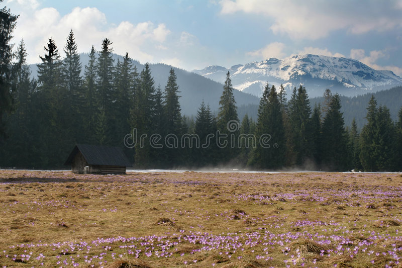 Flowers and mountain royalty free stock photo