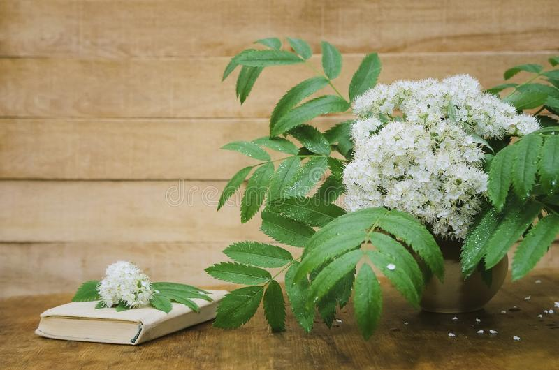 Flowers of mountain ash and a book on a wooden background. Close-up, selective focus, copyspace for text. Flowers of mountain ash and a book on a wooden royalty free stock image