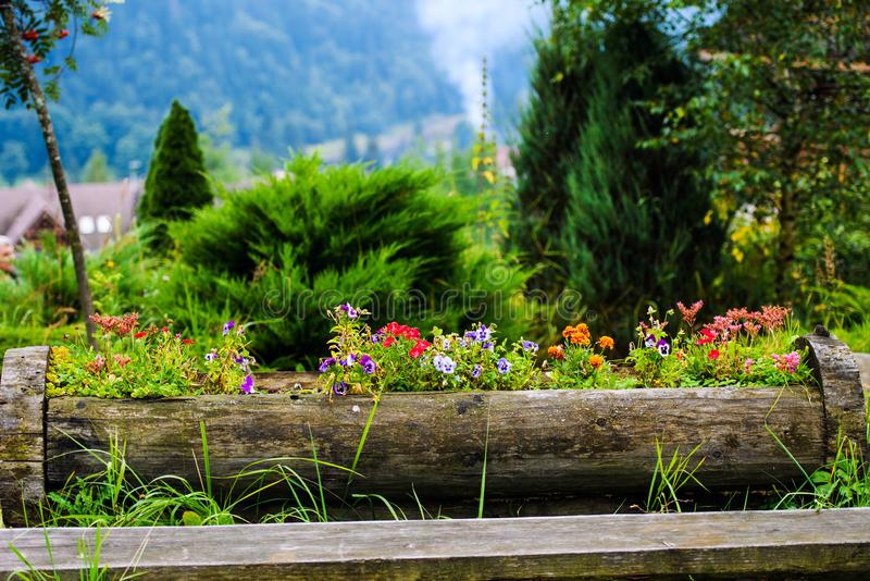 Flowers in the mountains royalty free stock photography