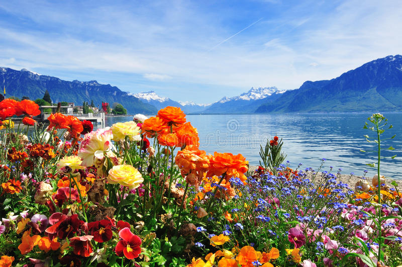 Flowers, Mountains Ald Lake Royalty Free Stock Image