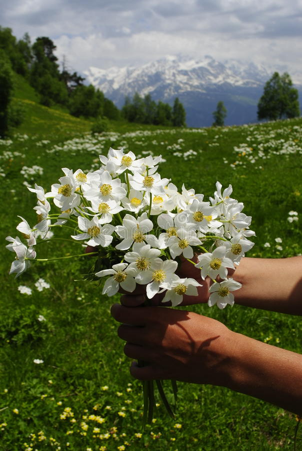 Flowers mountains caucasus stock photography