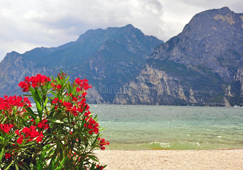 Flowers, Mountains And Lake Stock Photo