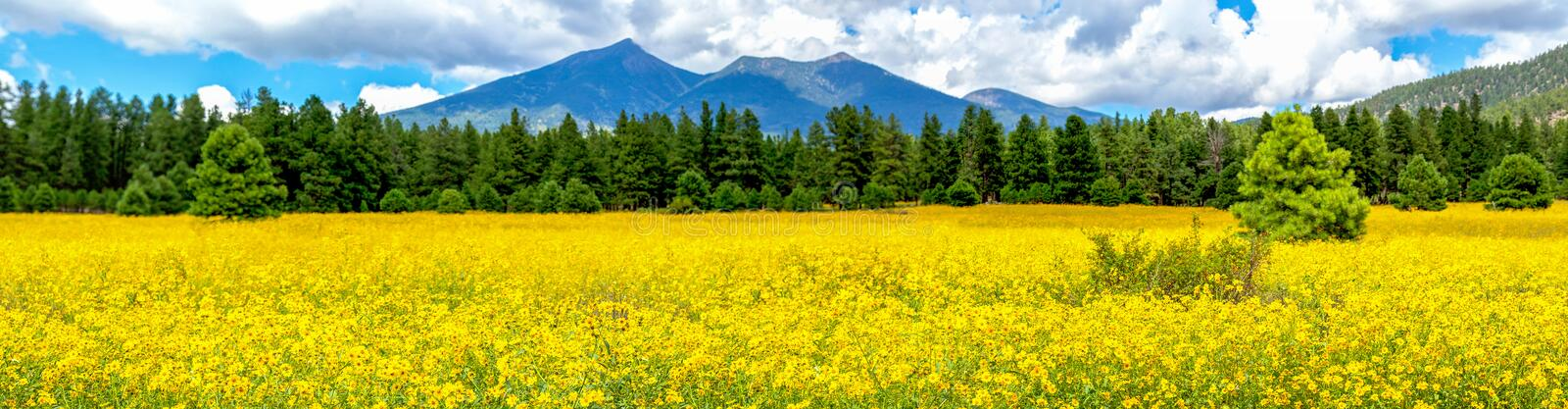 Flowers and Mountains. Mexican Sunflower Field Panorama royalty free stock photo